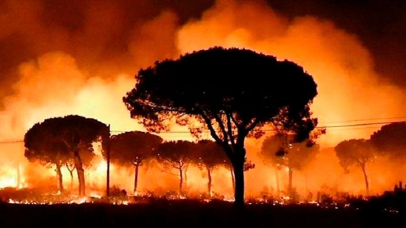 Amazonas en llamas: convocan a protestar frente a las