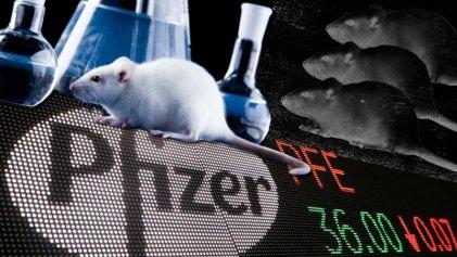 Pfizer: el laboratorio que probará su vacuna contra el coronavirus en Argentina