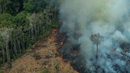 La Amazonia podría convertirse en sabana en 50 años por el agronegocio y la crisis climática